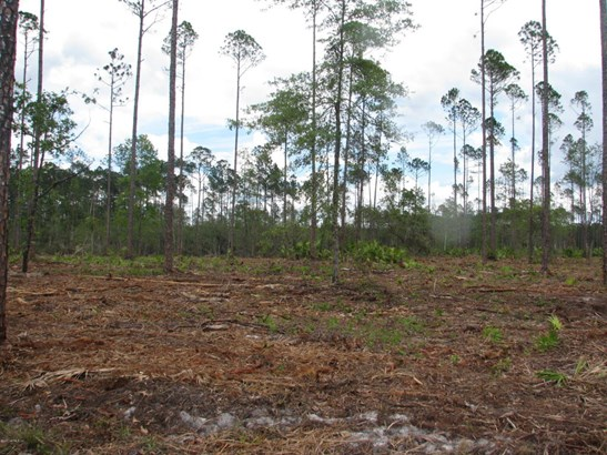 0 Woods 1217 1217, Callahan, FL - USA (photo 3)