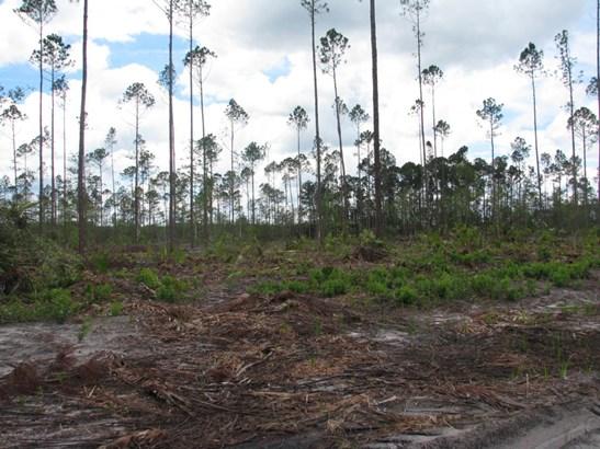 0 Woods 1217 1217, Callahan, FL - USA (photo 4)
