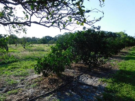 155 Elleanore , Oak Hill, FL - USA (photo 4)