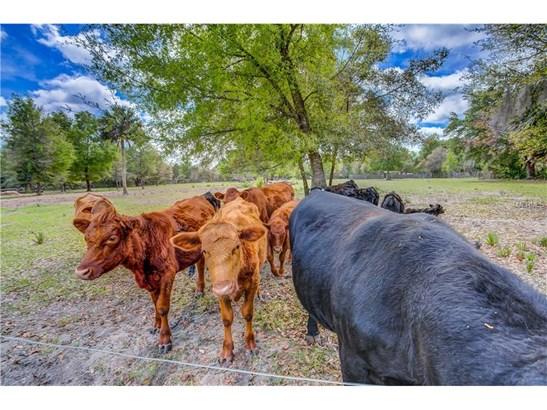 22250 Deer Park , Eustis, FL - USA (photo 3)
