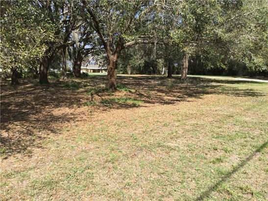 Oleander , Clermont, FL - USA (photo 3)