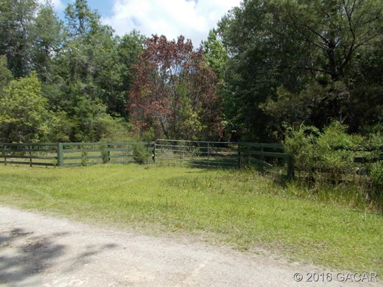 70.45 Quail , Cedar Key, FL - USA (photo 3)