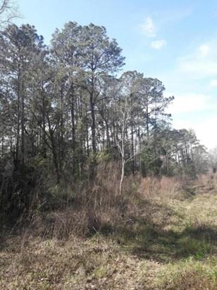 0 Hewitt , Jacksonville, FL - USA (photo 3)