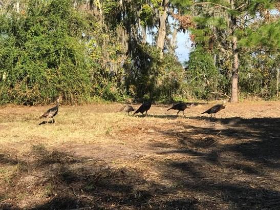 4661 Raggedy Point , Orange Park, FL - USA (photo 4)