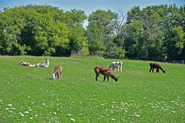 Llama Farm (photo 4)