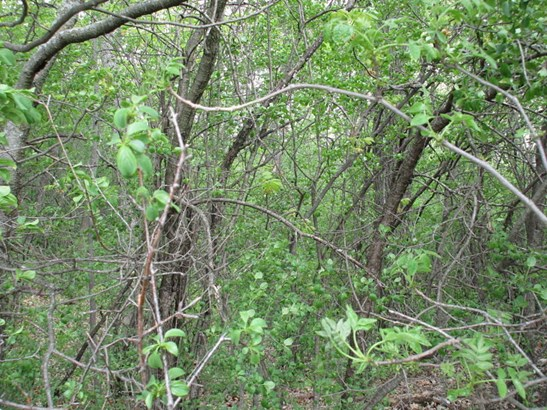 Backyard densely wooded (photo 4)