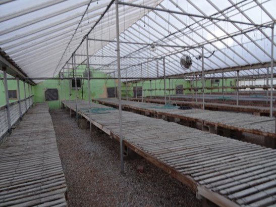 Greenhouse (photo 5)