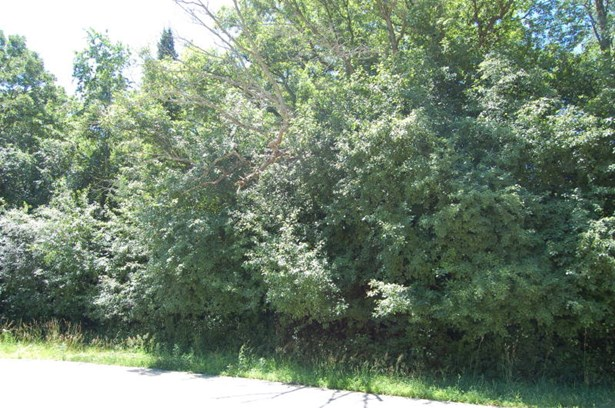 Wooded Sloped 1.5 Acre Lot (photo 2)