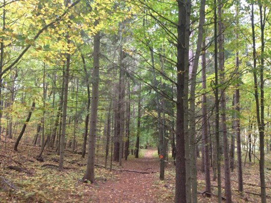 Buildable space, trails,pines (photo 2)