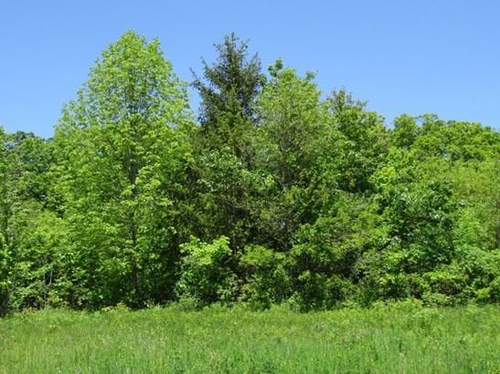 Lots of beautiful trees (photo 2)