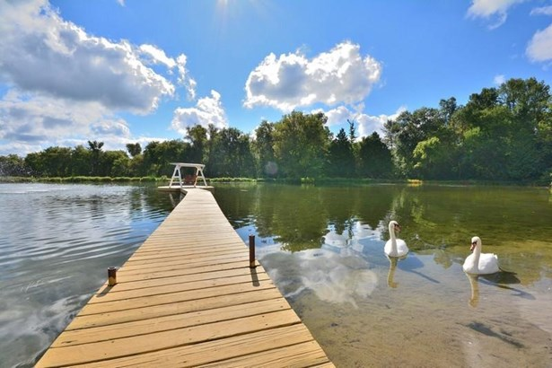Pier to Relax or Swim & Swans (photo 4)