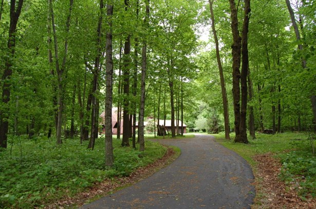 Wooded Driveway  Approach (photo 3)