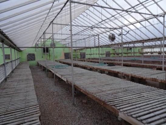 Greenhouse (photo 5)