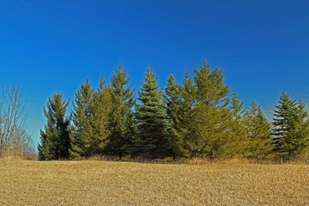 beautiful soaring Pines (photo 3)