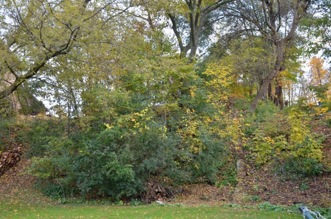 Wooded Lot (photo 5)