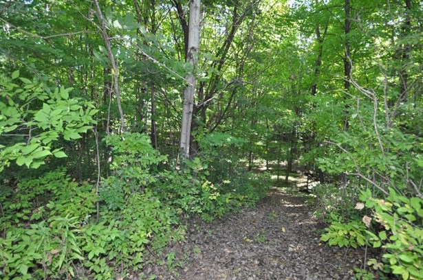 Wooded Grounds (photo 3)