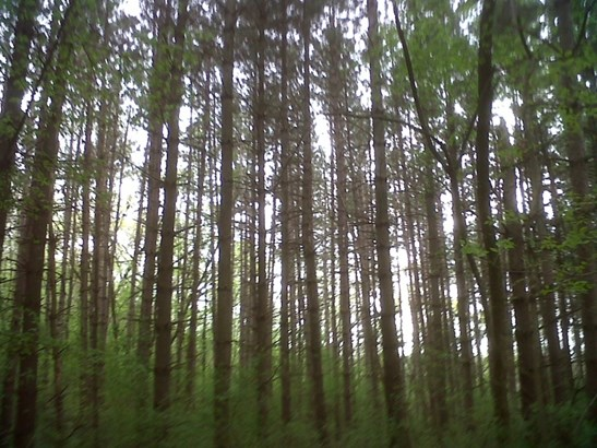 Gorgeous heavily wooded lot (photo 1)