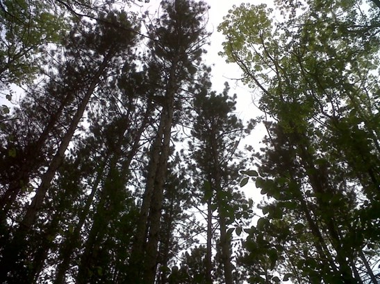 Gorgeous heavily wooded lot (photo 2)