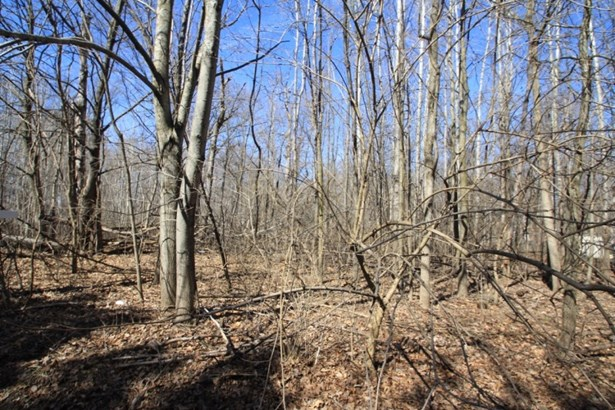Private Wooded Lot (photo 1)