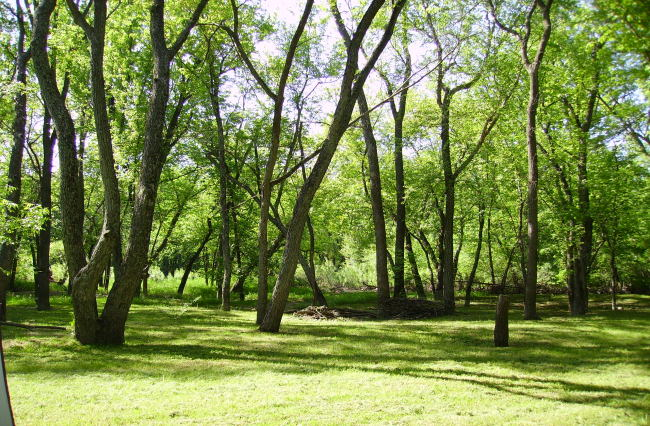 Wooded (photo 4)