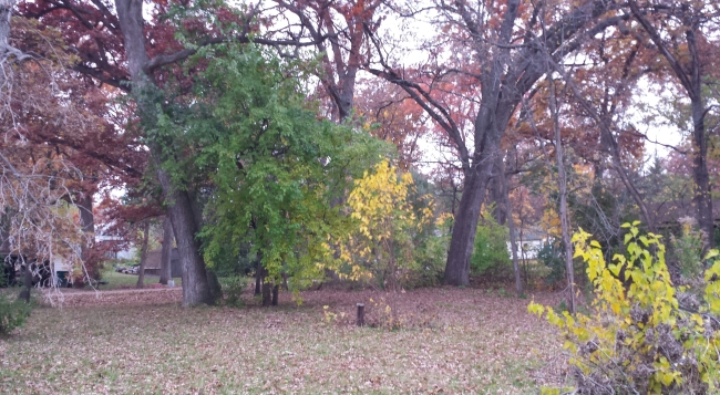 Double lot with Oak trees (photo 1)