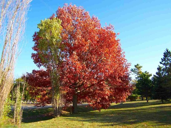 Beautiful Large Trees (photo 3)
