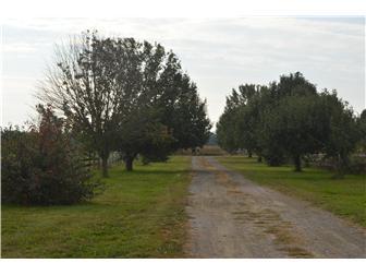 Lot 6 Cedar Grove Church Road, Felton, DE - USA (photo 2)