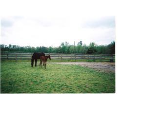 Horses Grazing. (photo 5)