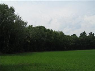 58 Acre Halltown Rd, Marydel, DE - USA (photo 1)