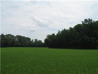 58 Acre Halltown Rd, Marydel, DE - USA (photo 4)
