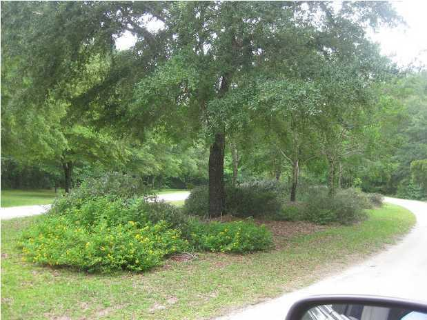 25  Joseph Blake Lane, Wadmalaw Island, SC - USA (photo 4)