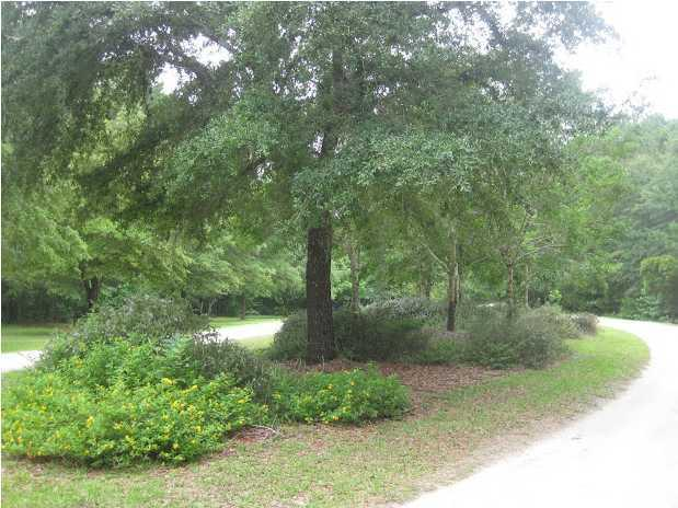 25  Joseph Blake Lane, Wadmalaw Island, SC - USA (photo 5)