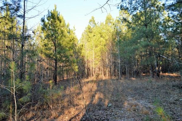 845  Target Road, Holly Hill, SC - USA (photo 4)