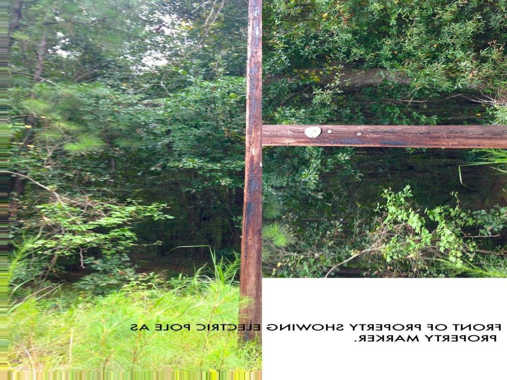 0  Campbell Thickett Road, Ridgeville, SC - USA (photo 5)