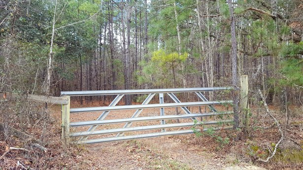 0  Rhode Drive, Cottageville, SC - USA (photo 3)