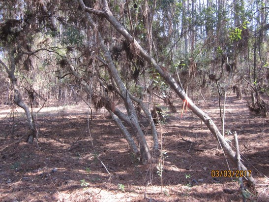 0  Back-a-wood Road Lot I, Wadmalaw Island, SC - USA (photo 2)