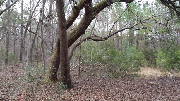 0  Back-a-wood Road Lot I, Wadmalaw Island, SC - USA (photo 3)