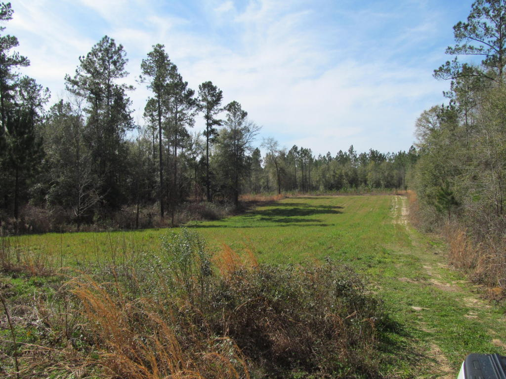 Land/Acres - Altha, FL (photo 4)
