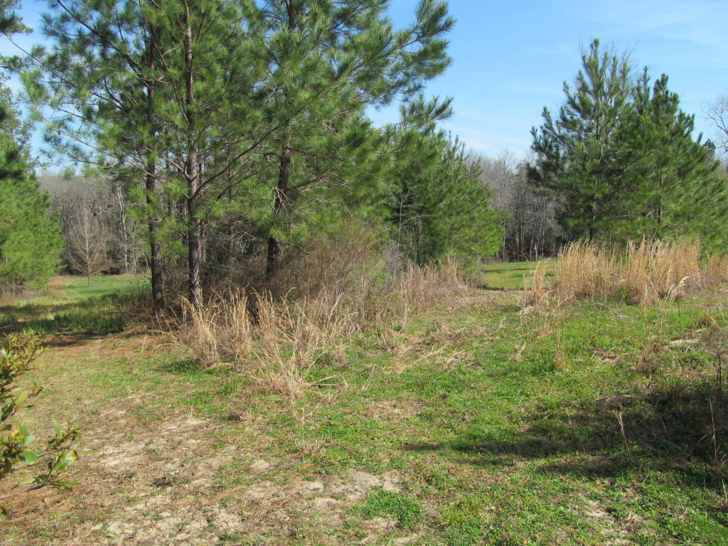 Land/Acres - Altha, FL (photo 5)