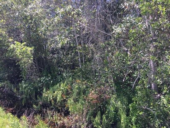 Vacant Land - Youngstown, FL (photo 5)