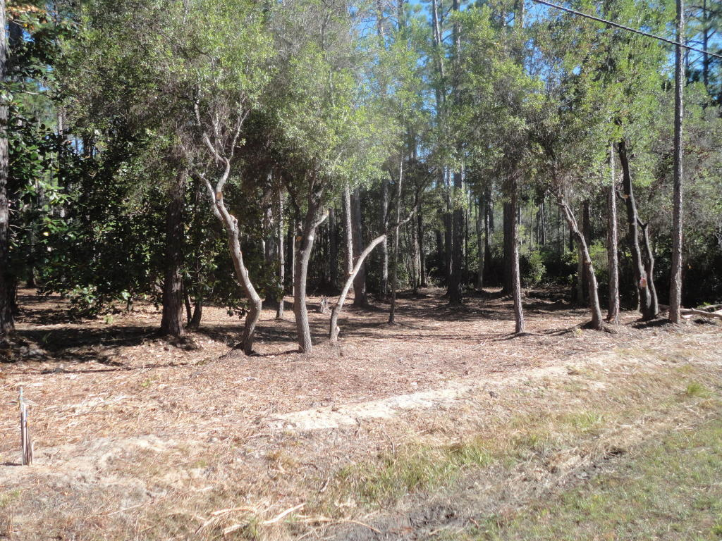 Residential Lots - Point Washington, FL (photo 1)