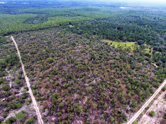 Land/Acres - Youngstown, FL (photo 5)