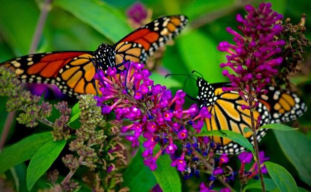 3 Lot Monarch Drive, Denison, TX - USA (photo 4)