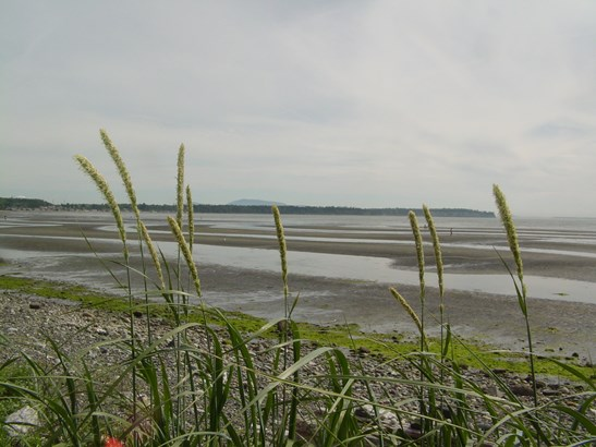 Tour of birch bay (photo 5)