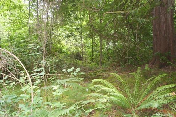 0 Maple Lane, Lilliwaup, WA - USA (photo 2)