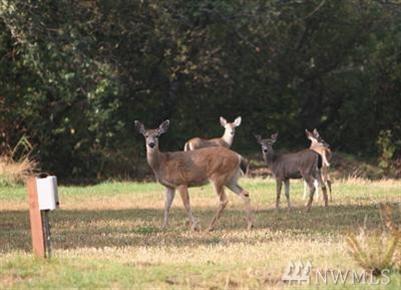 855 Salmonberry Lane, Grayland, WA - USA (photo 3)