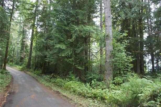 31 N Bow Tree Lane, Lilliwaup, WA - USA (photo 3)