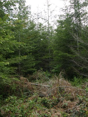 0 Middle Satsop Rd, Montesano, WA - USA (photo 3)
