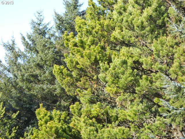 6900 Nestucca Ridge Rd 73, Pacific City, OR - USA (photo 2)