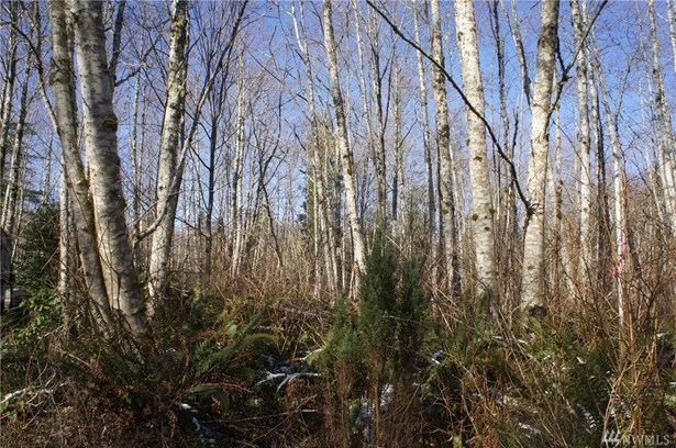 0 Blacktail Ct, Quilcene, WA - USA (photo 3)